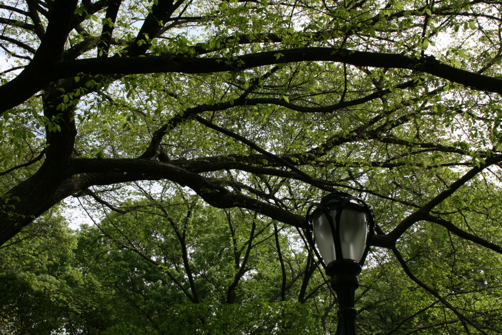 Lamp Post in Central Park