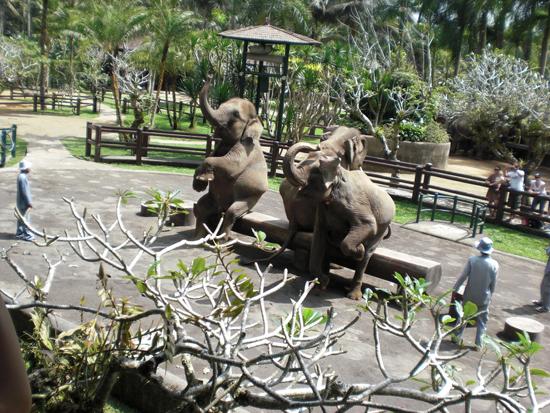 Elephant Safari in Bali