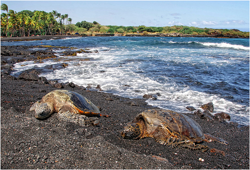 Best Beach On The Big Island To See Turtles