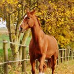 Horse in Autumn Landscape
