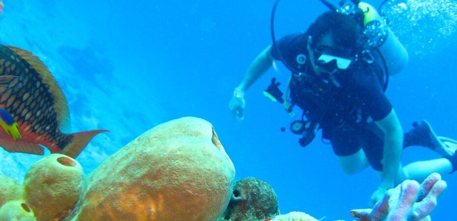 Top 5 Scuba Diving Destinations