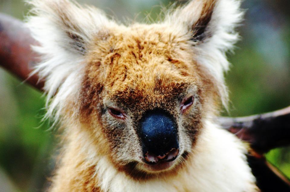 Epic Road Trips to Experience in Australia - Travel Tweaks